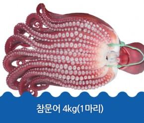 정품문어 4kg