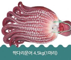 짝다리문어 4.5kg(1마리)