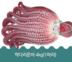 짝다리문어 4kg(1마리)